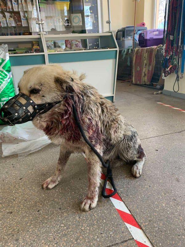 Матері з дітьми плакали: у Христинівці невідомі розстріляли безпритульного пса (ФОТО)