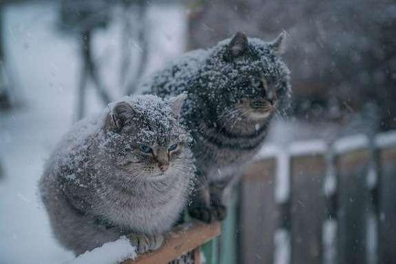 На Черкащину знову повертається мороз