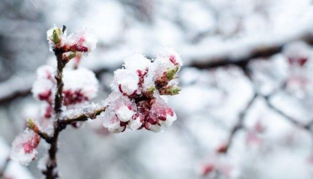 Черкащан попереджають про сильні заморозки
