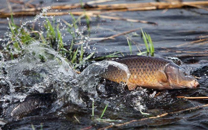 На Черкащині розпочалася весняно-літня нерестова заборона на вилов риби