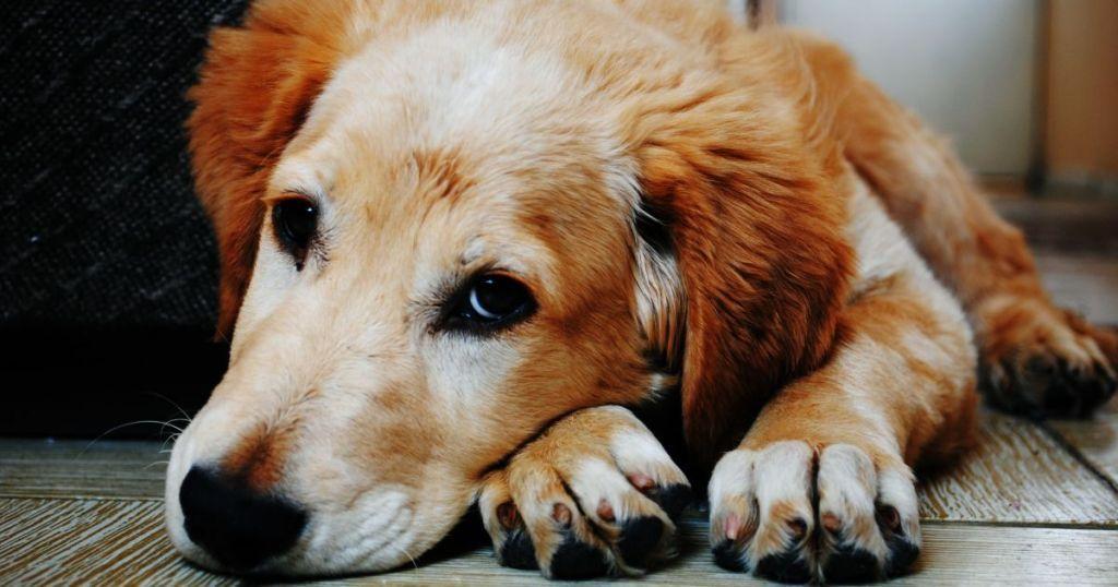 У Черкасах п'яний чоловік вбив і викинув у вікно свого пса