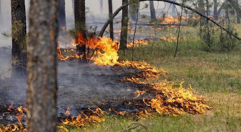 Рятувальники Черкащини продовжують боротися з пожежами сухої трави (ВІДЕО)