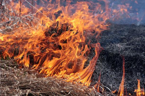 Черкащани, попри застереження рятувальників, продовжують палити суху траву (ВІДЕО)