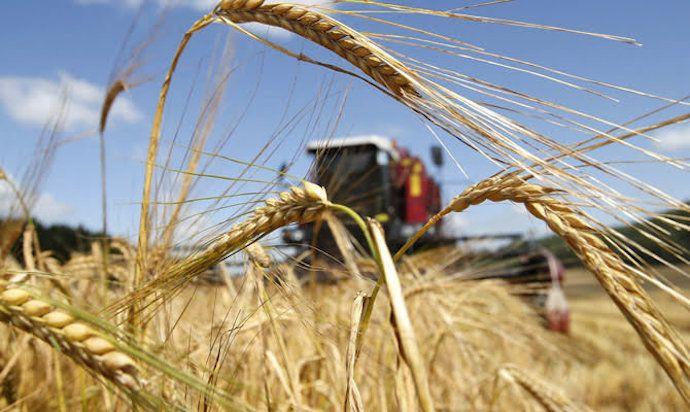Агрометеорологи прогнозують високий врожай хлібів на Черкащині