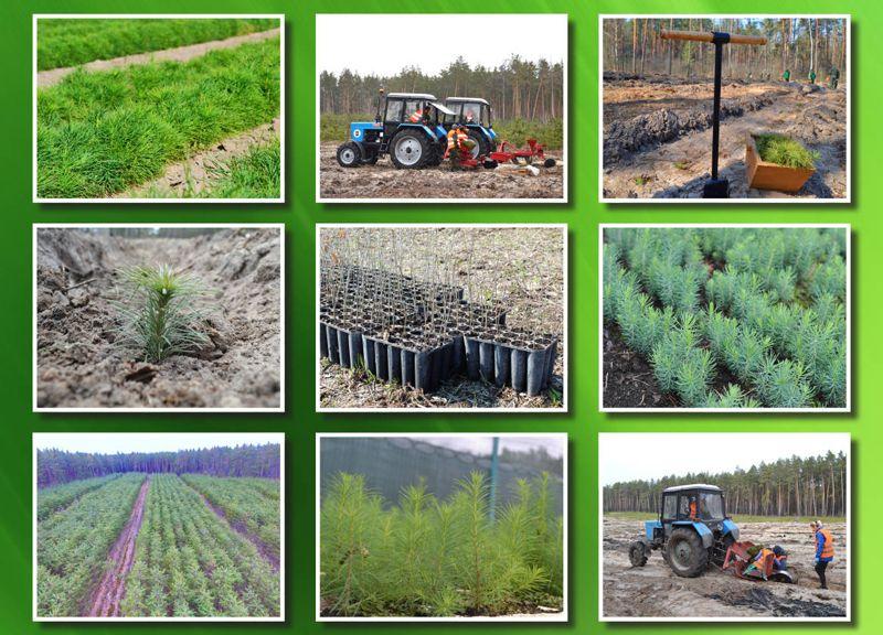 Лісівники Черкащини завершили весняну лісокультурну кампанію