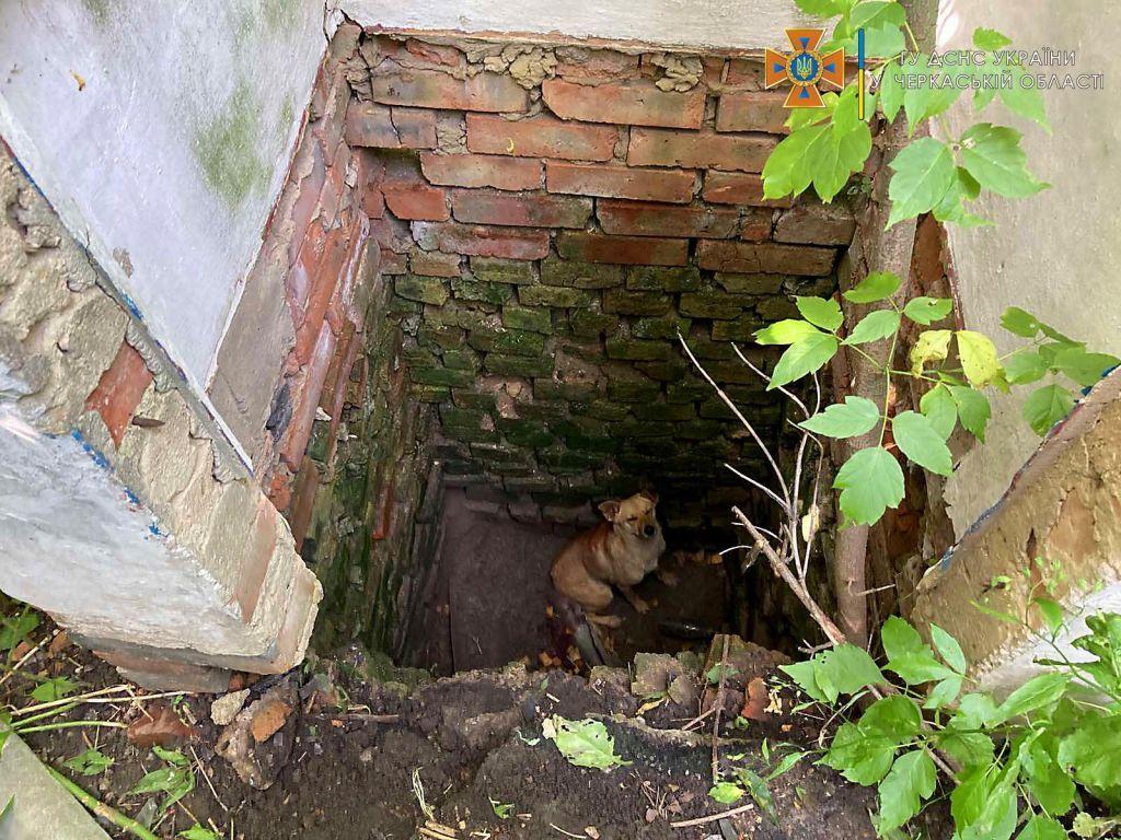 На Черкащині рятувальники діставали з ями собаку