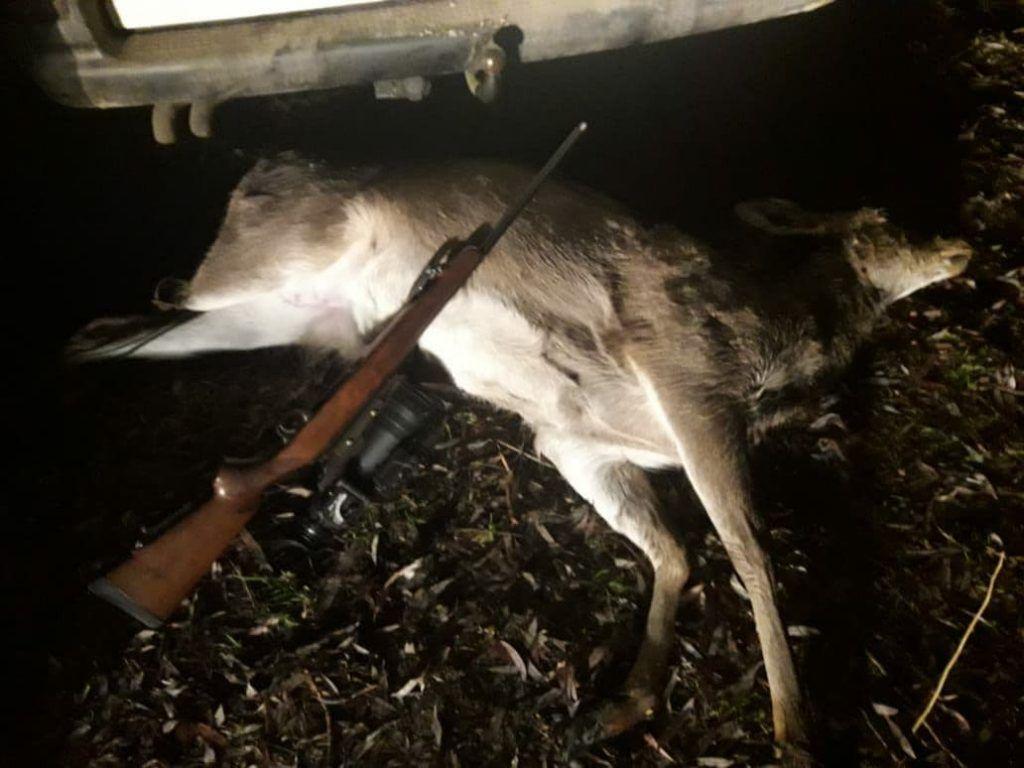 За вбивство оленя черкащанин заплатить штраф