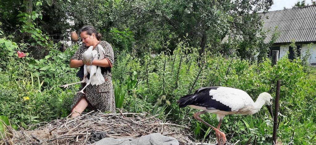 На Черкащині жінки всім селом рятували лелеченят, гніздо яких зруйнував буревій (ФОТО)