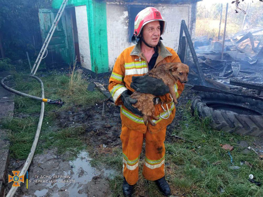 На Уманщині рятувальники витягли з вогню собаку