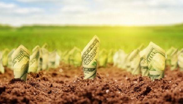 Ринок землі на Черкащині: в Кабміні назвали мінімальну ціну за гектар