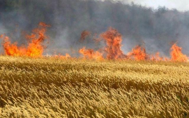 На Черкащині через несправний комбайн згоріло поле пшениці