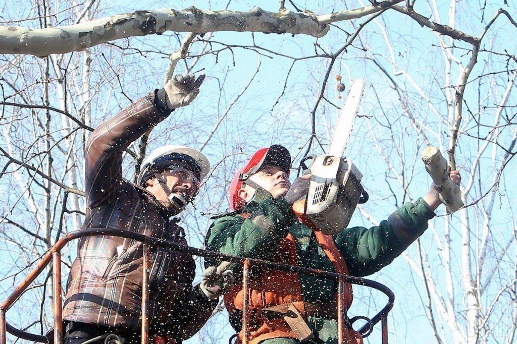 На Черкащині суд стягнув із сільської ради збитки за омертвіння майже 70 дерев