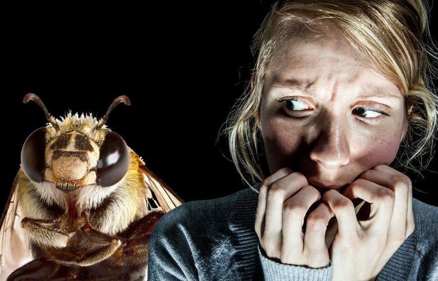 Смертельне жало: черкащани, які опинилися за крок від смерті через алергію на комах